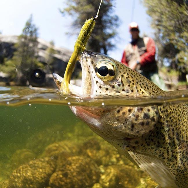 Fishing Georgia